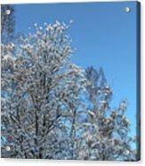 Snowy Trees Against A Blue Sky Acrylic Print