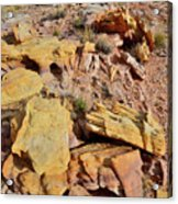 Splash Of Color In Valley Of Fire Acrylic Print