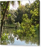 Swamp Reflection Acrylic Print