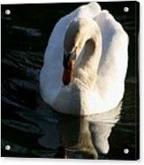 Swan Lake Story Acrylic Print