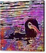 Swan Young Animal Bird Waters  Acrylic Print