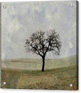 Textured Tree Acrylic Print by Bernard Jaubert