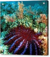 Thailand, Marine Life Acrylic Print by Dave Fleetham - Printscapes