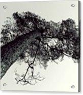 Trees And Sky Acrylic Print