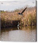 Turkey Creek In Palm Bay Florida Acrylic Print