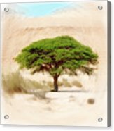 Umbrella Thorn Acacia Acacia Tortilis, Negev Israel Acrylic Print