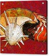 Underwater. Sea Shells. Acrylic Print