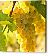 Yellow Grapes Acrylic Print