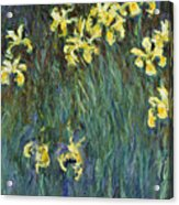 Yellow Irises Acrylic Print
