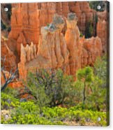 Fairyland Canyon Acrylic Print