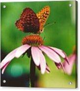 #416 14a Butterfly Fritillary, Coneflower Lunch Break Good Till The Last Drop Acrylic Print