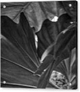 4327- Leaf Black And White Acrylic Print