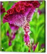 4390- Flower Acrylic Print