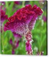 4393- Flower Acrylic Print