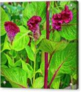 4398- Flowers Acrylic Print