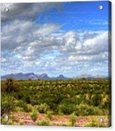 Sonora Desert Acrylic Print