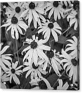 4400- Daisies Black And White Acrylic Print