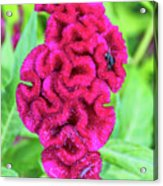 4408- Flower Acrylic Print