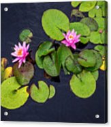 4425- Lily Pads Acrylic Print