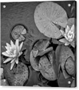 4432- Lily Pads Black And White Acrylic Print