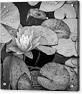 4434- Lily Pads Black And White Acrylic Print