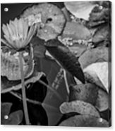 4466- Lily Pads Black And White Acrylic Print