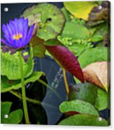 4466- Lily Pads Acrylic Print