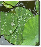 4634- Lilypad Acrylic Print