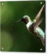 4753 - Ruby-throated Hummingbird Acrylic Print