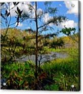 49- Florida Everglades Acrylic Print