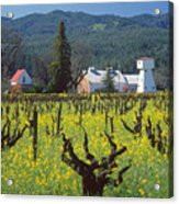 4b6394 Mustard In The Vineyards Acrylic Print