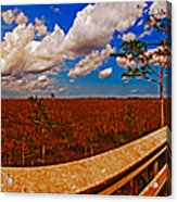 4x1 Everglades Panorama Number Two Acrylic Print