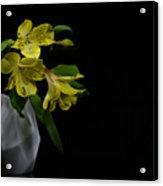 Alstroemeria Flower Acrylic Print