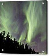 Aurora Borealis Over Trees, Yukon Acrylic Print