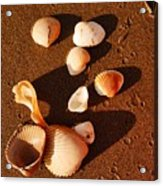 Beach Shells Acrylic Print