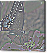 Butterfly Collection Acrylic Print