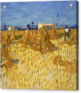 Corn Harvest In Provence Acrylic Print