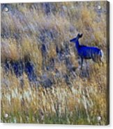 Deer Outdoors. Acrylic Print