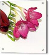 Freesia And Tulip Acrylic Print
