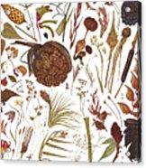 Herbarium Specimen Acrylic Print