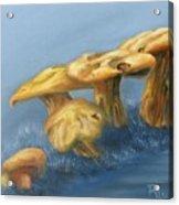 Five Little Mushrooms Acrylic Print