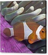 Malaysia, Marine Life Acrylic Print
