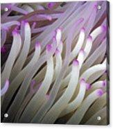 Micronesia, Marine Life Acrylic Print