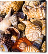 Mix Group Of Seashells Acrylic Print