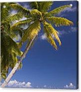 Polynesian Beach With Palms Acrylic Print