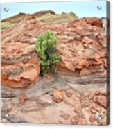 Sandstone Color In Valley Of Fire Acrylic Print