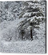 Snowstorm In The Pike National Forest Acrylic Print