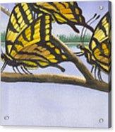 5 Swallowtails Acrylic Print