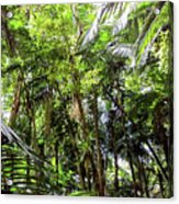 The El Yunque National Forest, Puerto Rico Acrylic Print