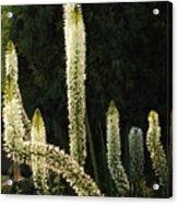 White Blooms Acrylic Print